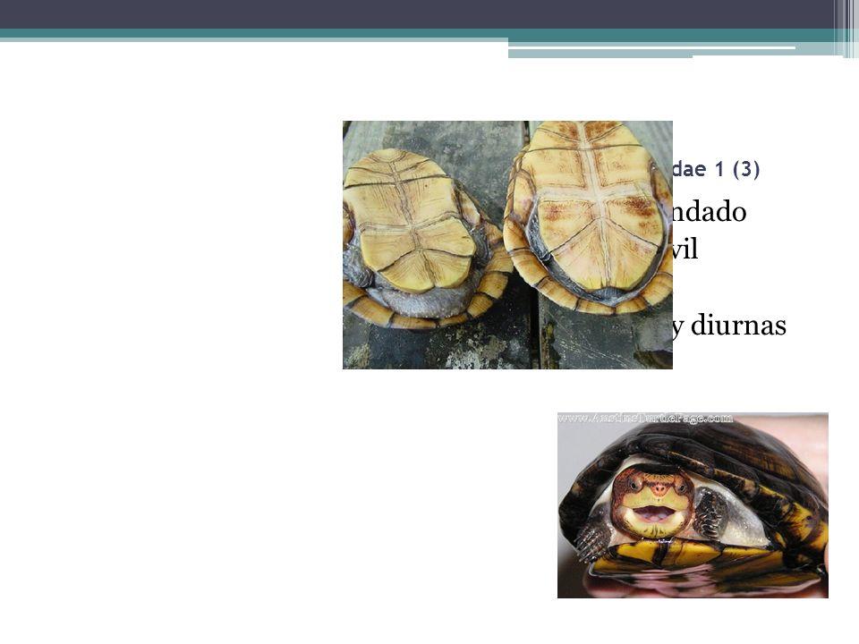 Tortuga candado Platrón móvil Hervíboras Terrestres y diurnas