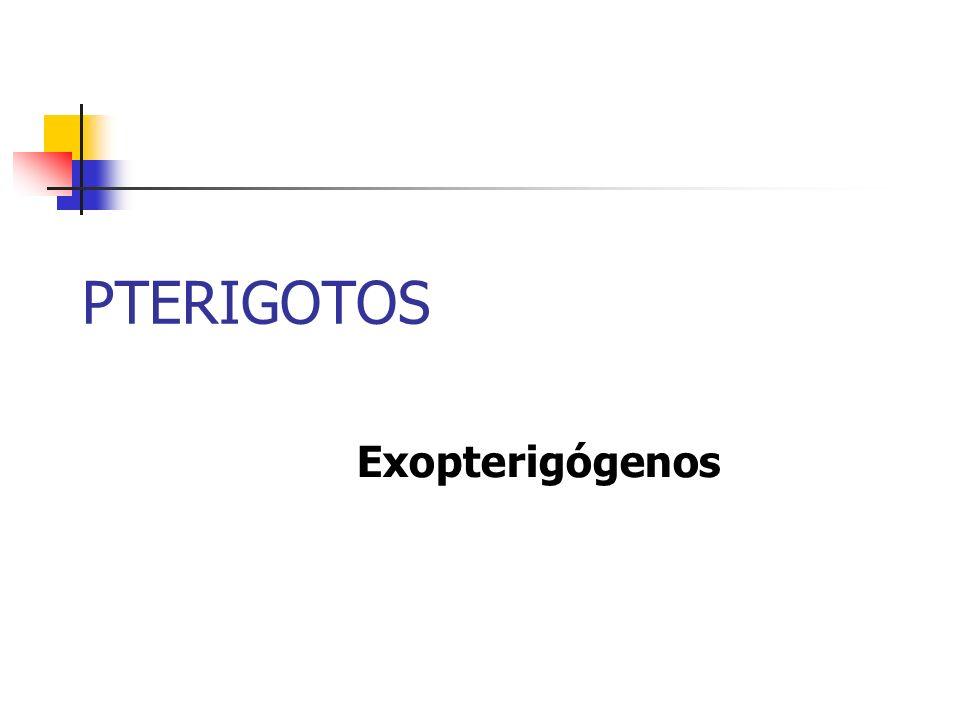 PTERIGOTOS Exopterigógenos