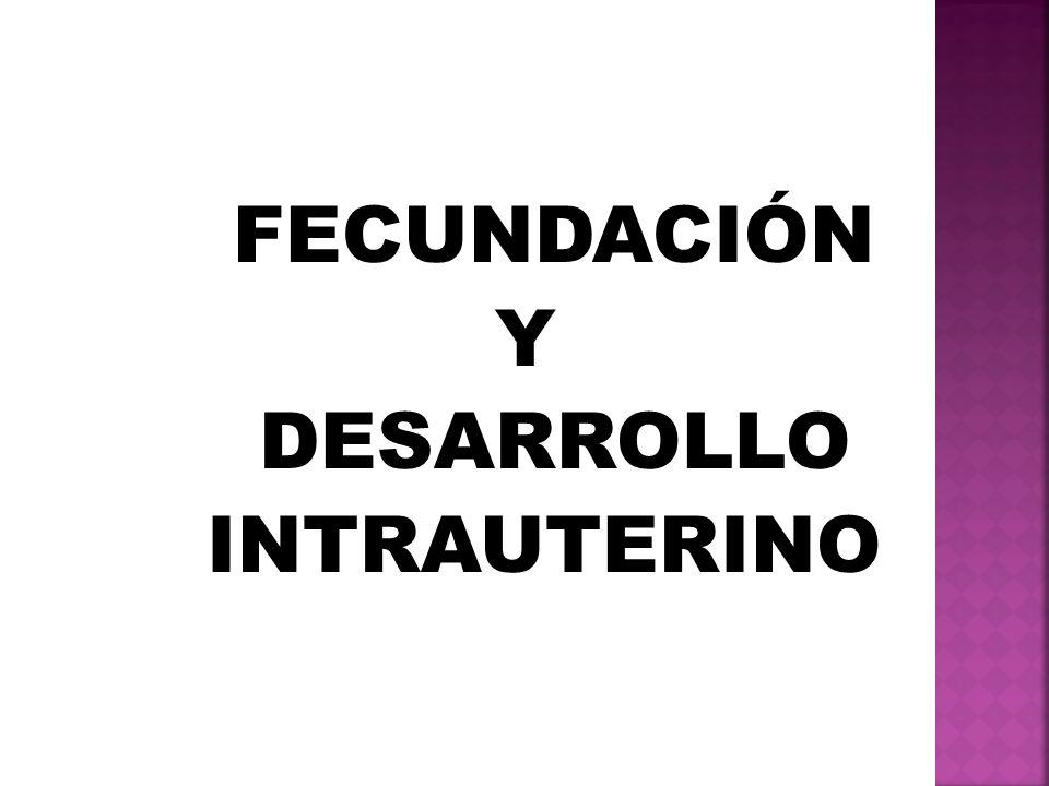 FECUNDACIÓN Y DESARROLLO INTRAUTERINO