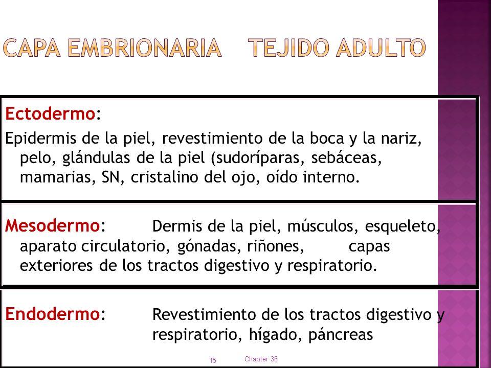 Capa embrionaria Tejido adulto