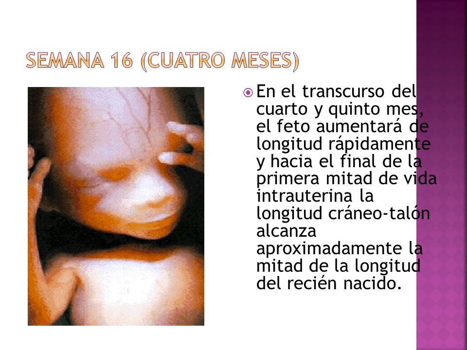SEMANA 16 (CUATRO MESES)