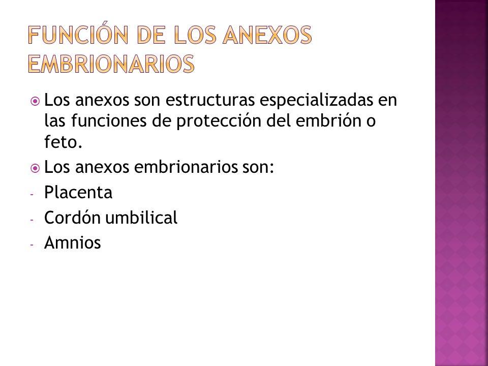 Función de los anexos embrionarios