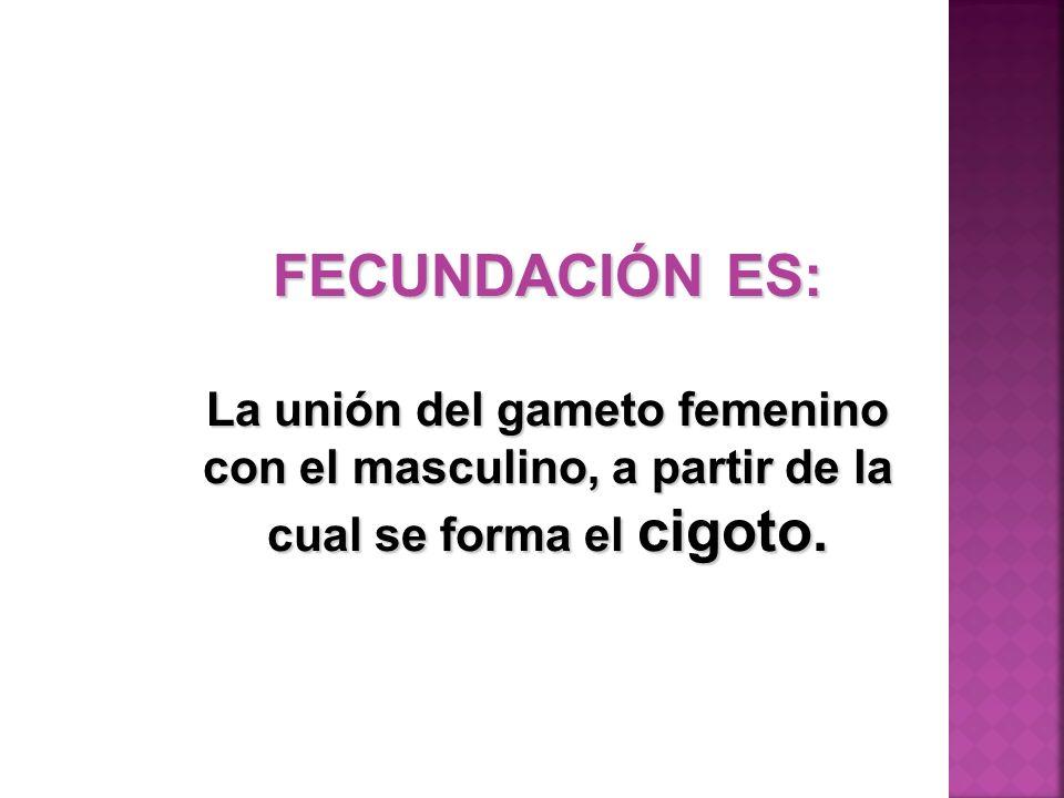 FECUNDACIÓN ES: La unión del gameto femenino con el masculino, a partir de la cual se forma el cigoto.