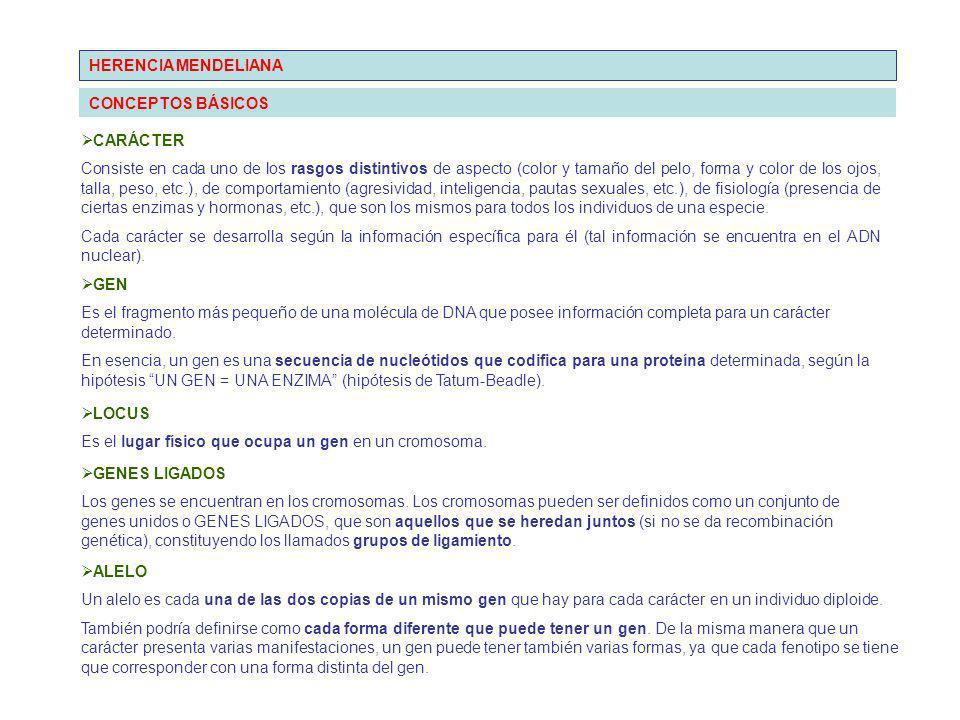 HERENCIA MENDELIANA CONCEPTOS BÁSICOS. CARÁCTER.