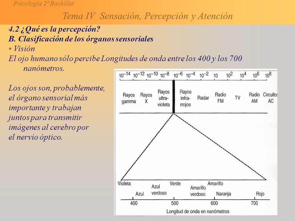 4.2 ¿Qué es la percepción B. Clasificación de los órganos sensoriales. • Visión.