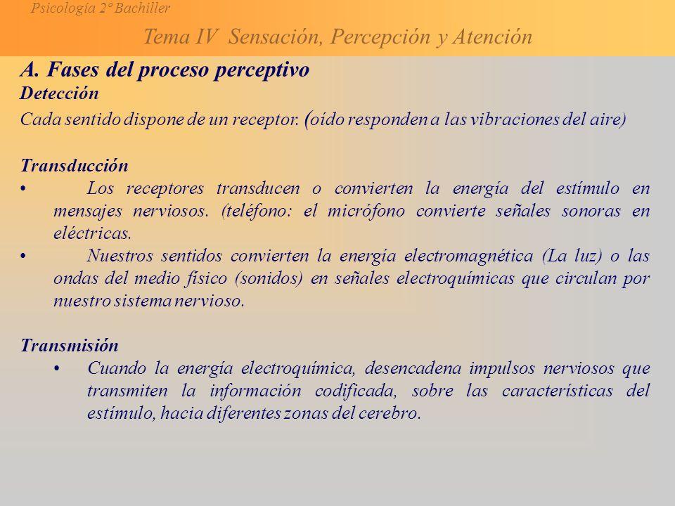 A. Fases del proceso perceptivo
