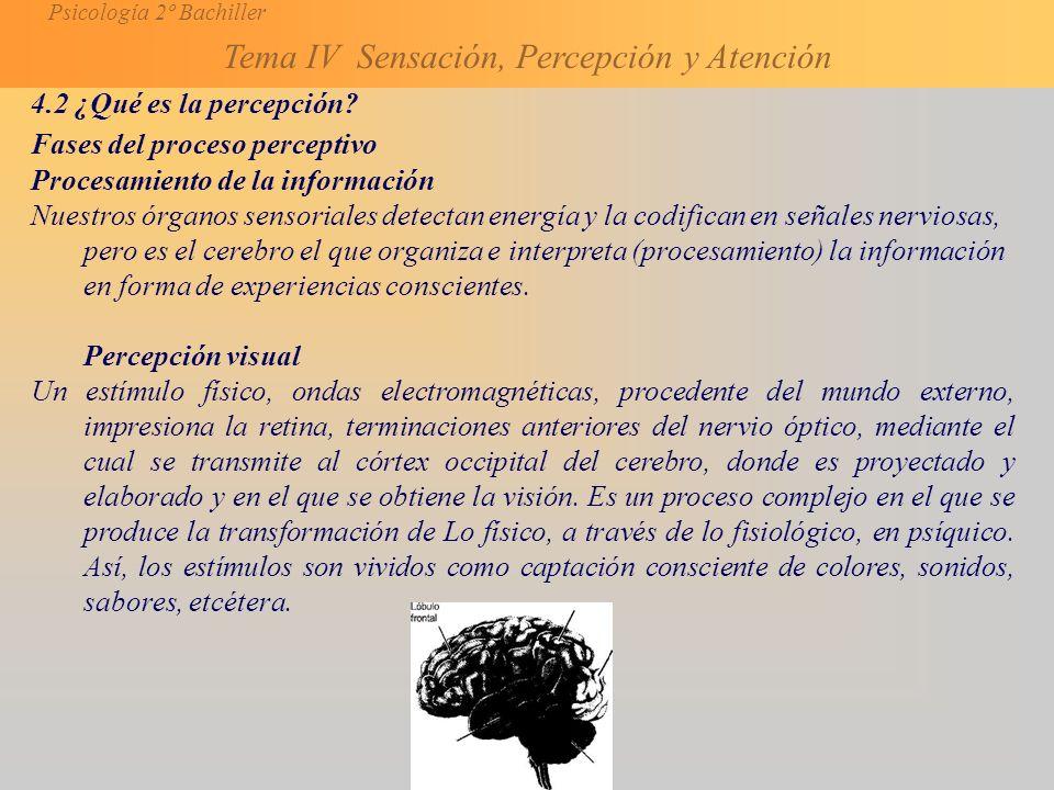 4.2 ¿Qué es la percepción Fases del proceso perceptivo. Procesamiento de la información.