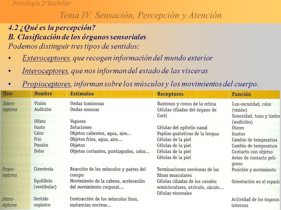 4.2 ¿Qué es la percepción B. Clasificación de los órganos sensoriales. Podemos distinguir tres tipos de sentidos: