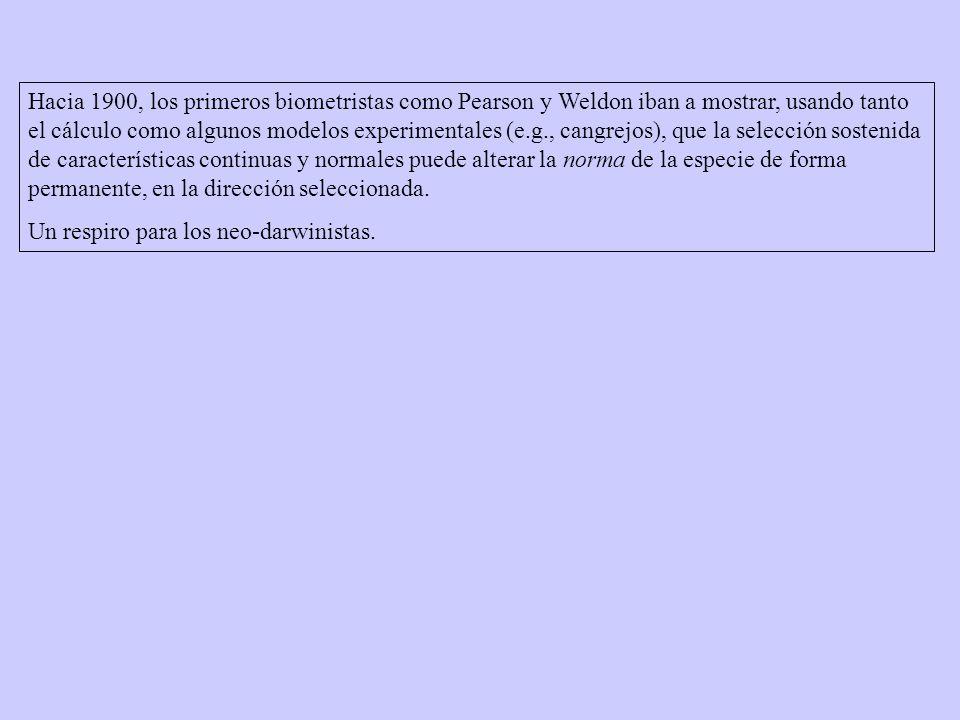 Hacia 1900, los primeros biometristas como Pearson y Weldon iban a mostrar, usando tanto el cálculo como algunos modelos experimentales (e.g., cangrejos), que la selección sostenida de características continuas y normales puede alterar la norma de la especie de forma permanente, en la dirección seleccionada.