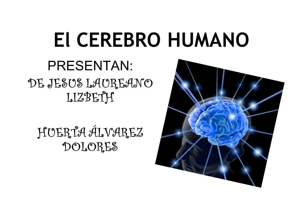 PRESENTAN: DE JESUS LAUREANO LIZBETH HUERTA ÁLVAREZ DOLORES