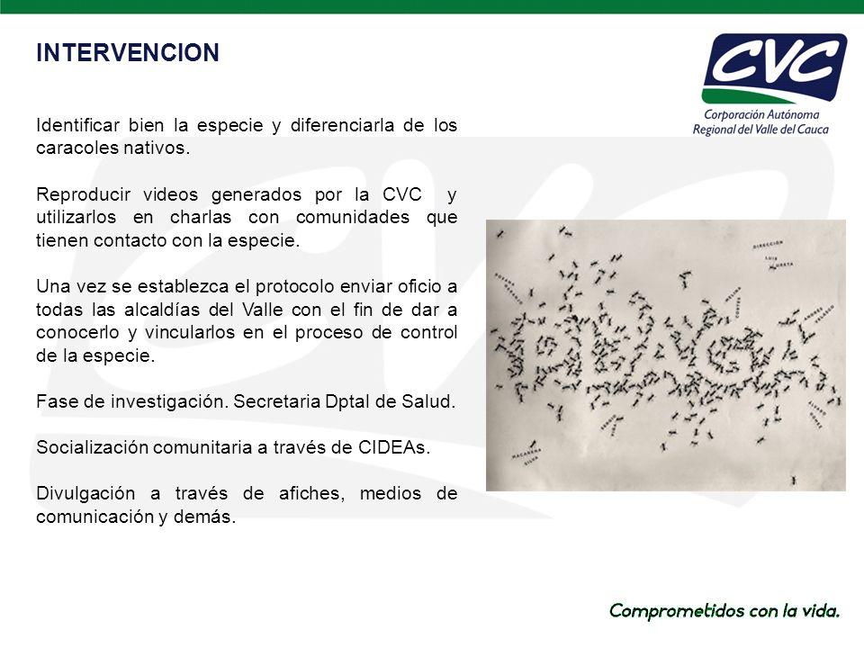 INTERVENCION Identificar bien la especie y diferenciarla de los caracoles nativos.