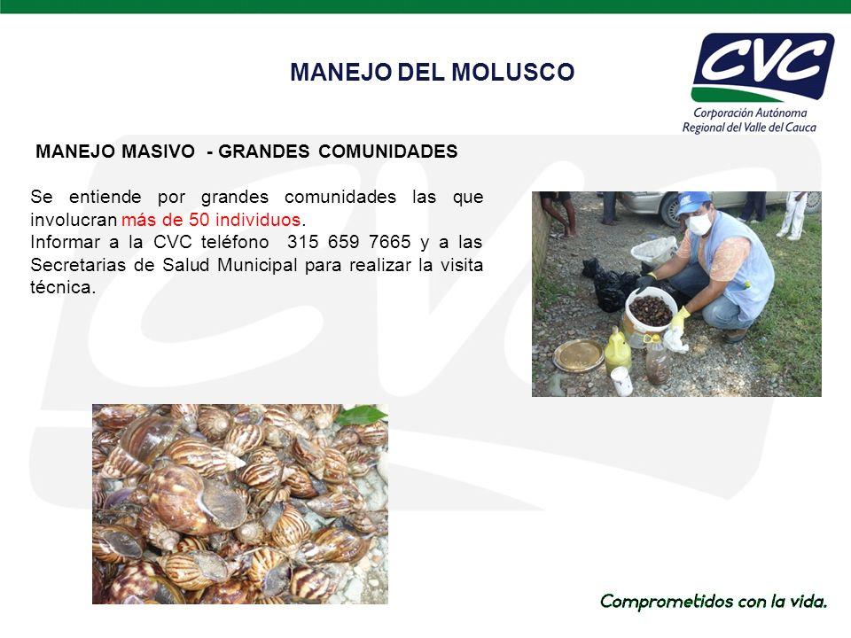 MANEJO DEL MOLUSCO MANEJO MASIVO - GRANDES COMUNIDADES