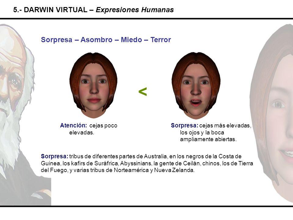 < 5.- DARWIN VIRTUAL – Expresiones Humanas