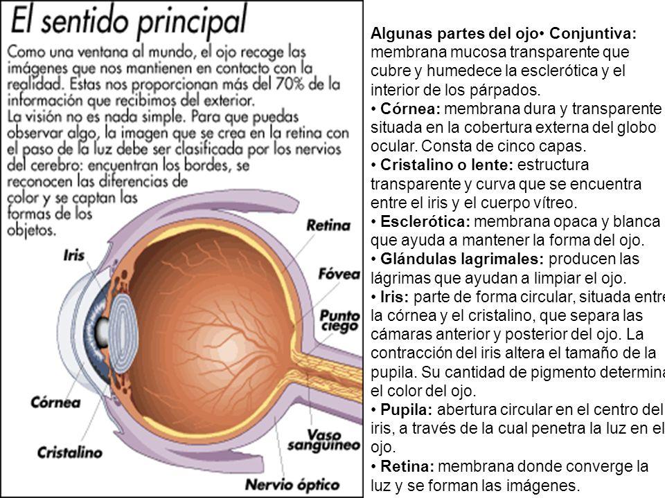Algunas partes del ojo• Conjuntiva: membrana mucosa transparente que cubre y humedece la esclerótica y el interior de los párpados.