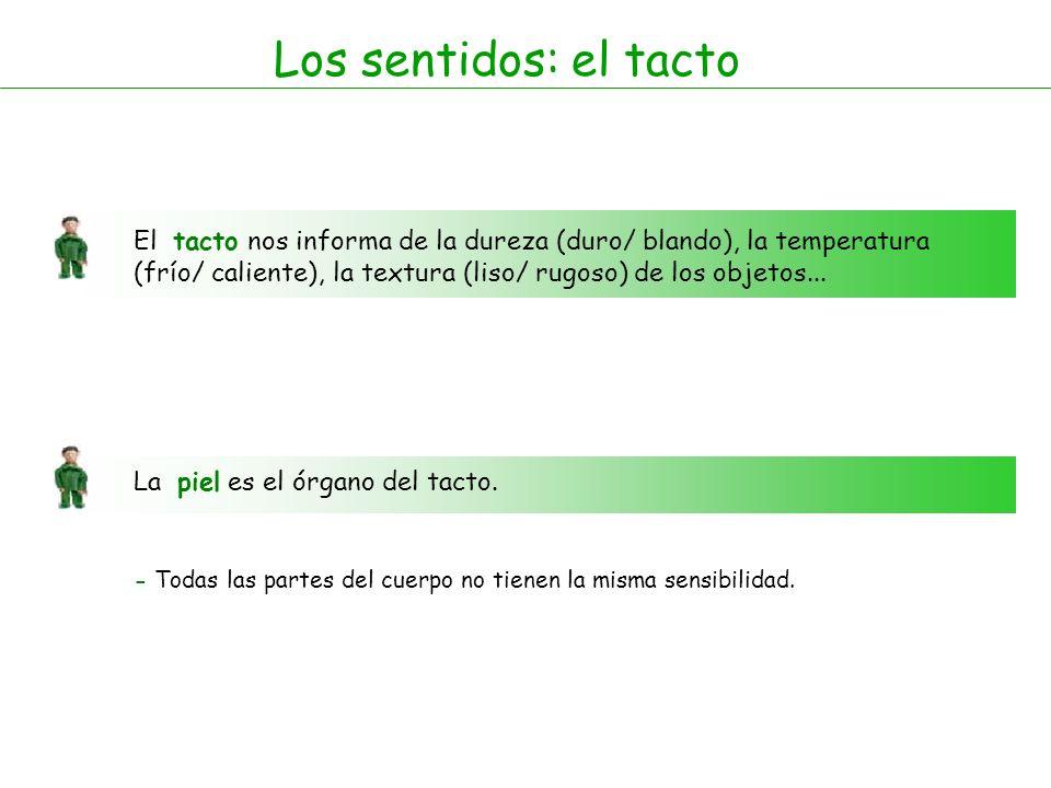 Los sentidos: el tacto El tacto nos informa de la dureza (duro/ blando), la temperatura.