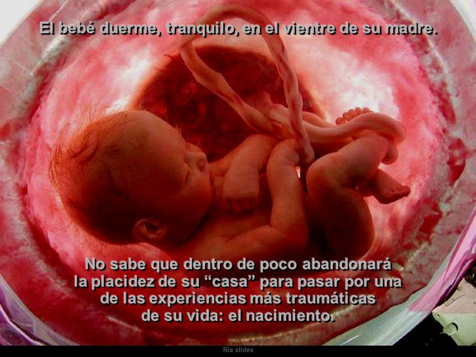 El bebé duerme, tranquilo, en el vientre de su madre.