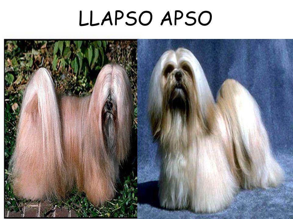 LLAPSO APSO