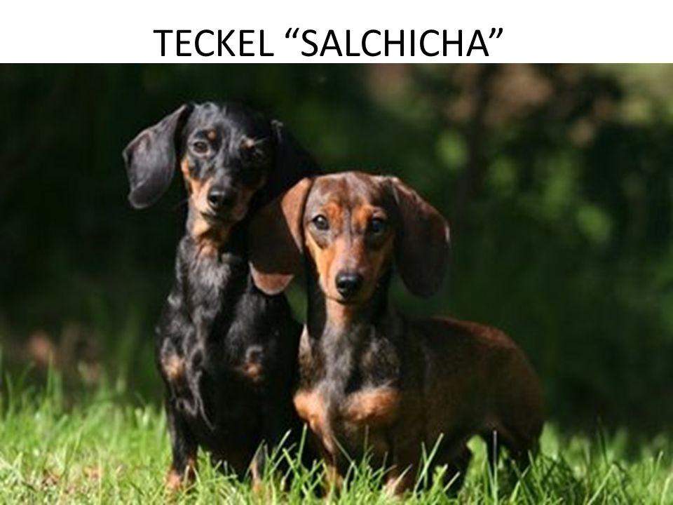 TECKEL SALCHICHA