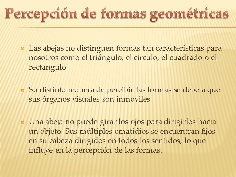 Percepción de formas geométricas