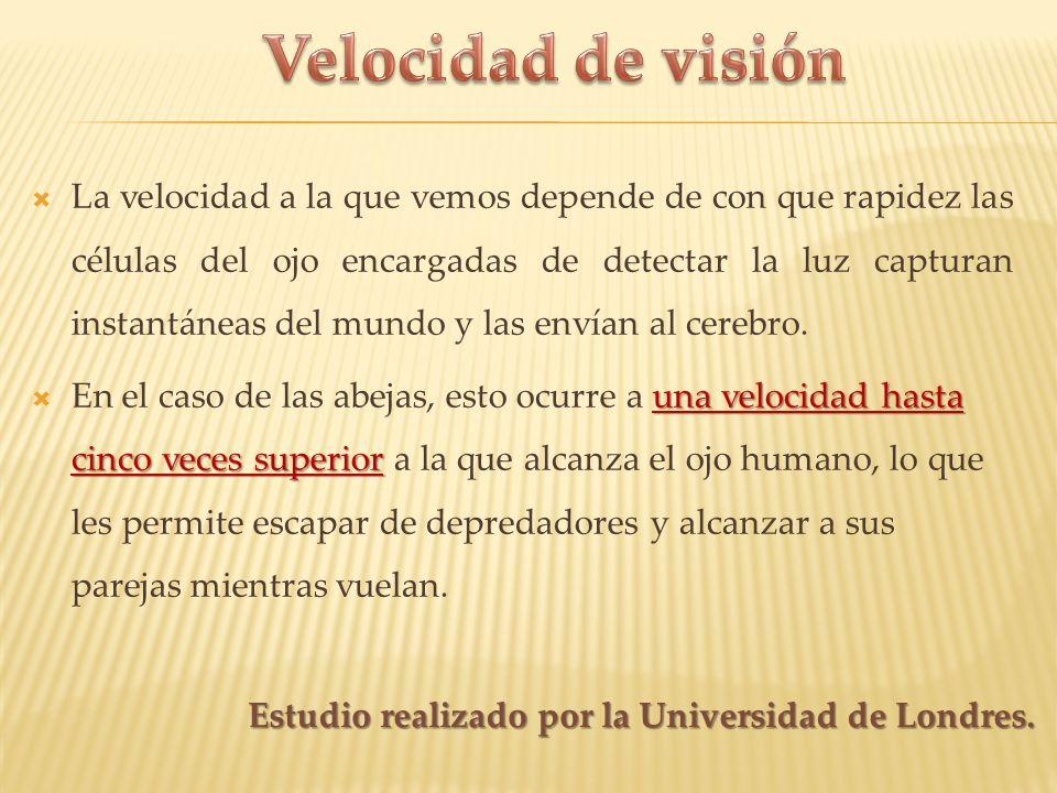 Velocidad de visión