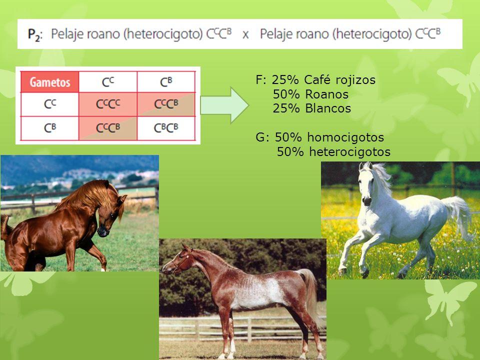 F: 25% Café rojizos 50% Roanos 25% Blancos G: 50% homocigotos 50% heterocigotos