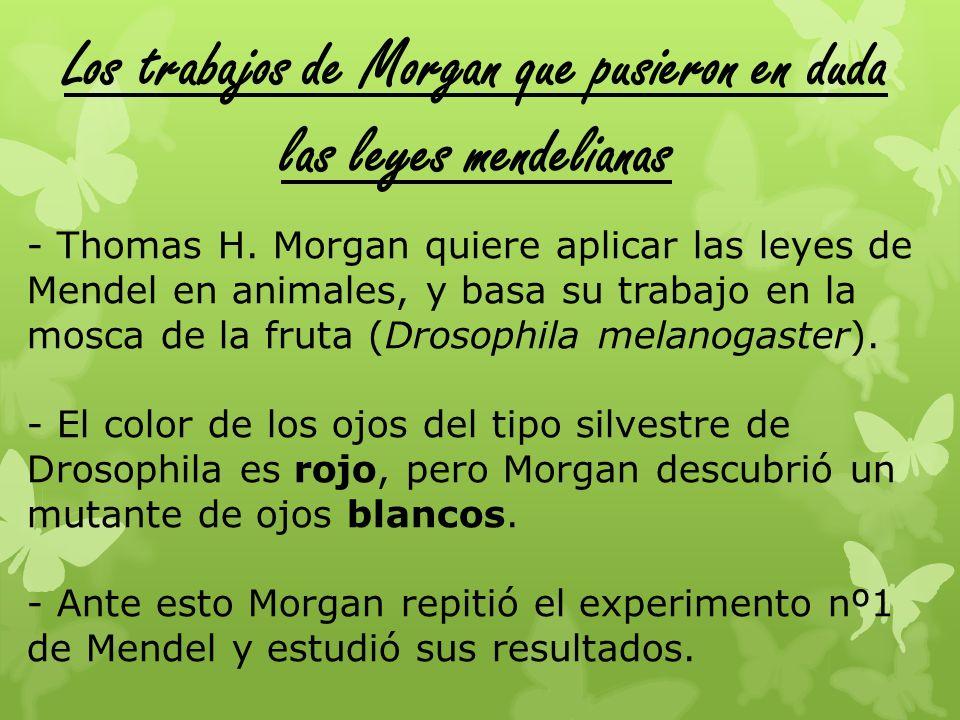 Los trabajos de Morgan que pusieron en duda las leyes mendelianas