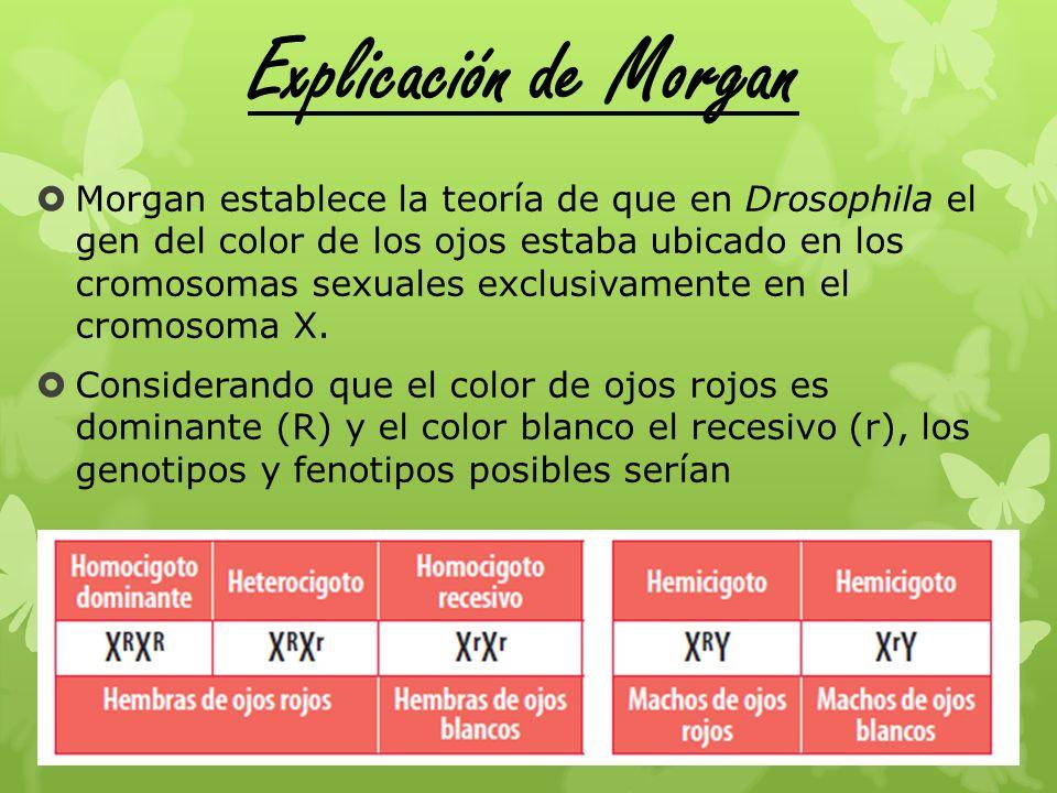 Explicación de Morgan