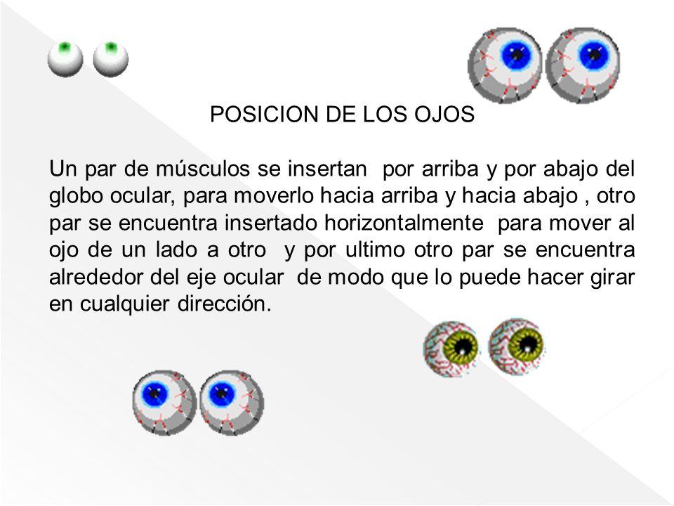 POSICION DE LOS OJOS