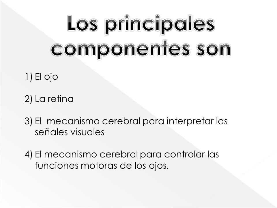 Los principales componentes son