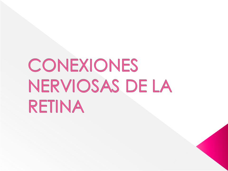 CONEXIONES NERVIOSAS DE LA RETINA