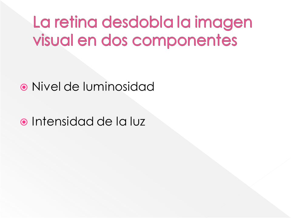 La retina desdobla la imagen visual en dos componentes