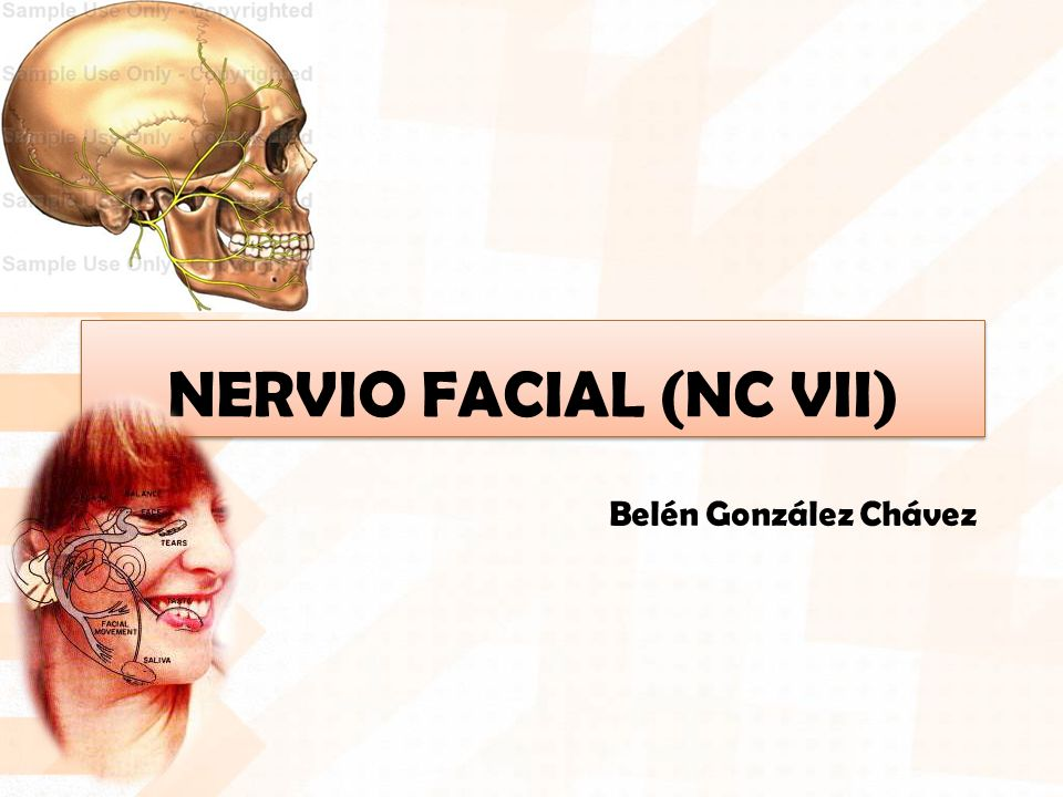 NERVIO FACIAL (NC VII) Belén González Chávez