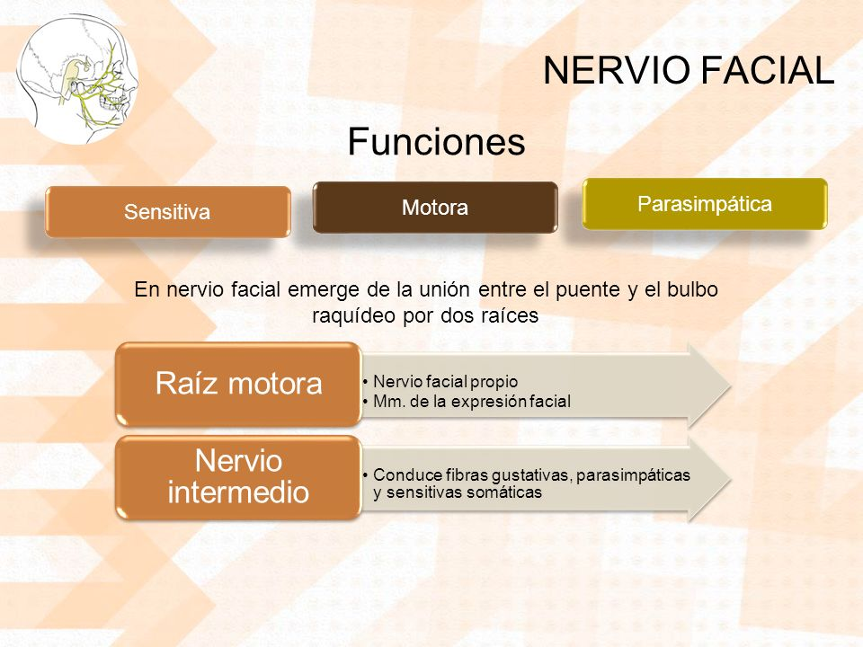 NERVIO FACIAL Funciones Parasimpática Motora Sensitiva