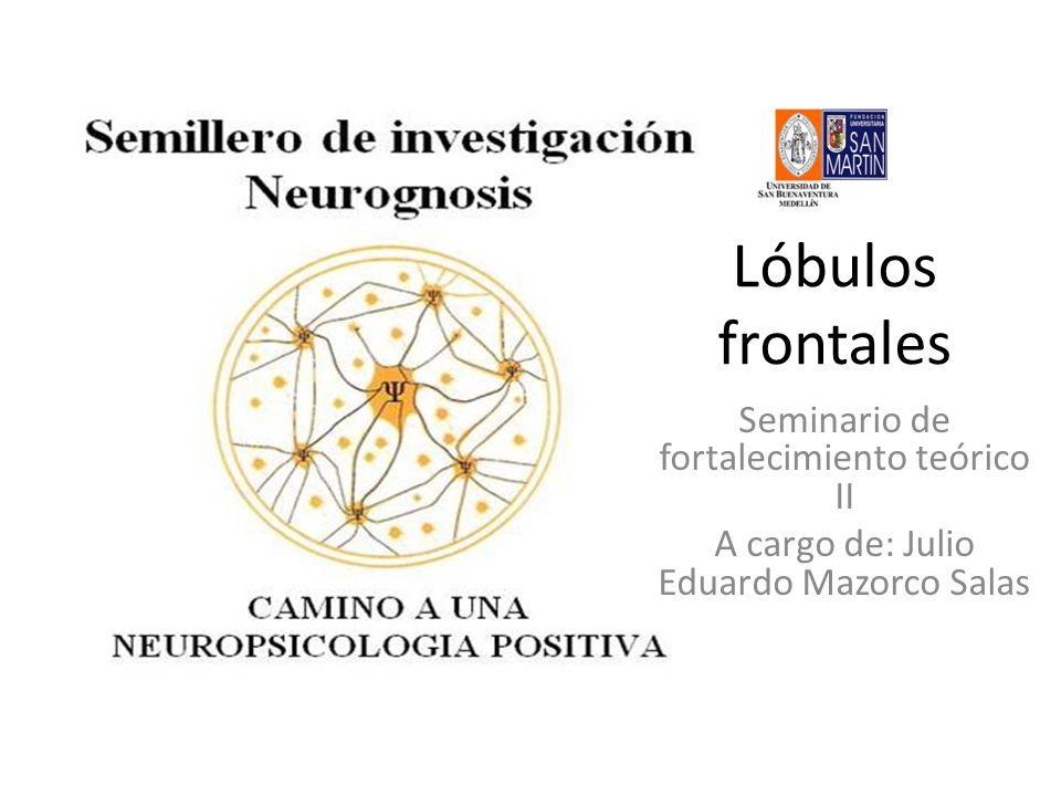 Lóbulos frontales Seminario de fortalecimiento teórico II