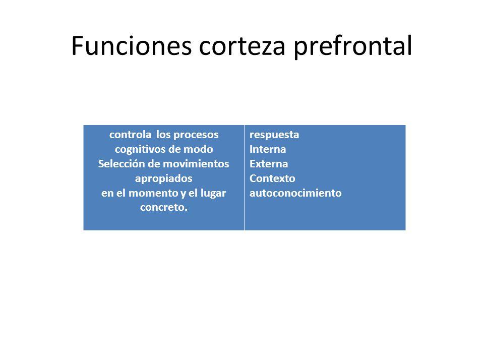 Funciones corteza prefrontal