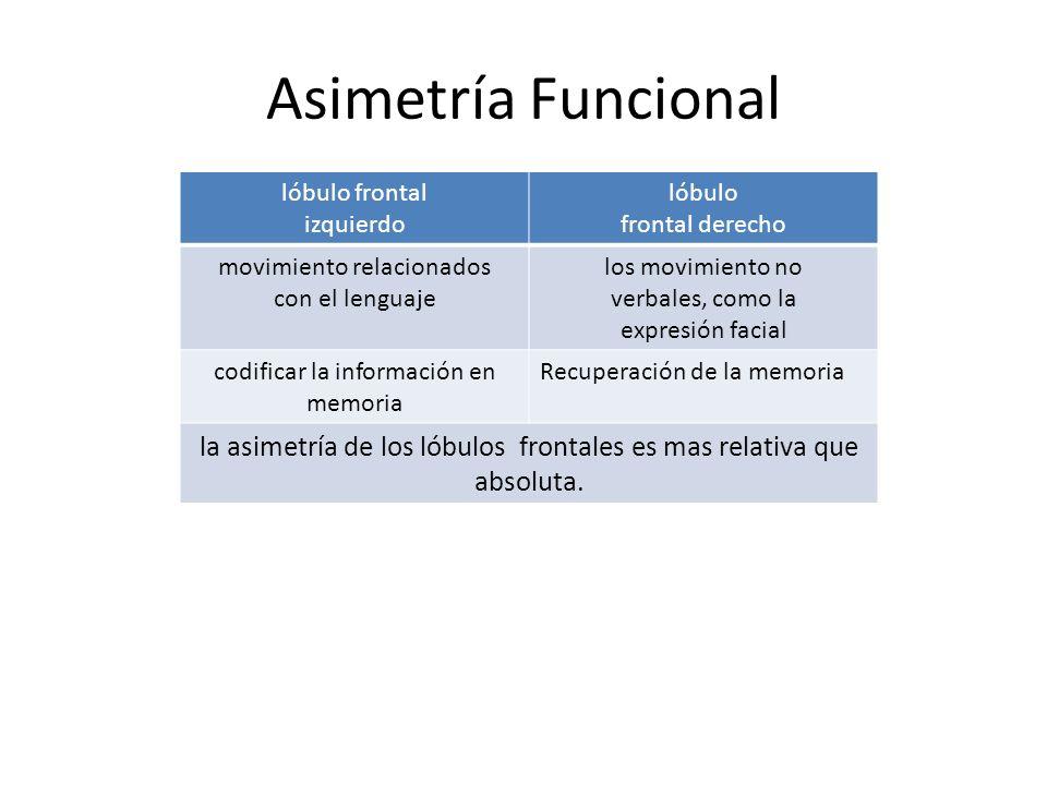 Asimetría Funcional lóbulo frontal. izquierdo. lóbulo. frontal derecho. movimiento relacionados.