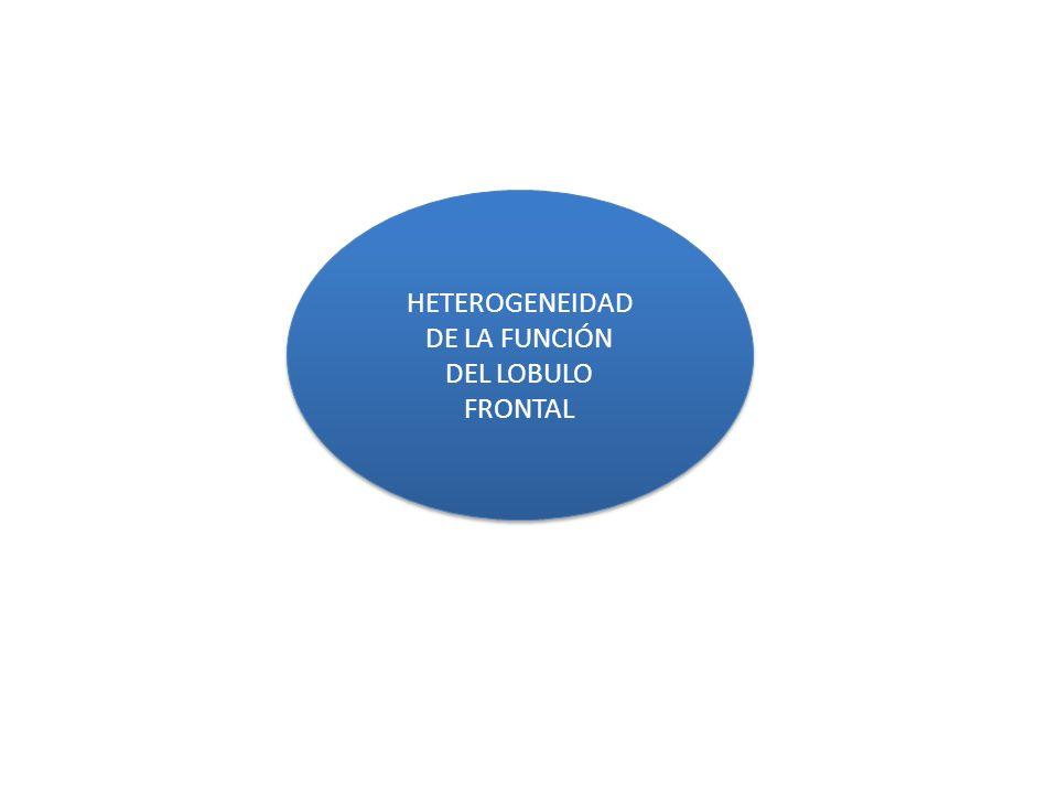 HETEROGENEIDAD DE LA FUNCIÓN DEL LOBULO FRONTAL