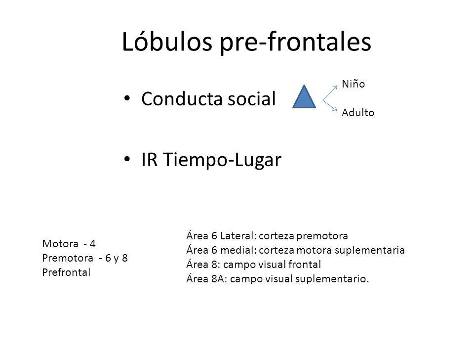 Lóbulos pre-frontales