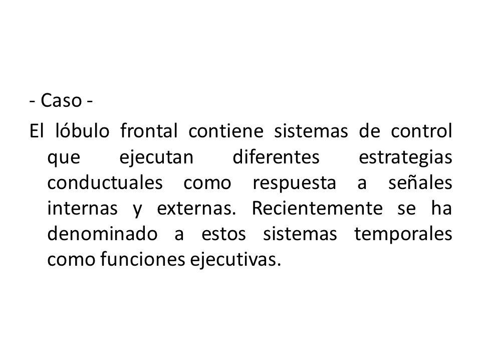 - Caso - El lóbulo frontal contiene sistemas de control que ejecutan diferentes estrategias conductuales como respuesta a señales internas y externas.