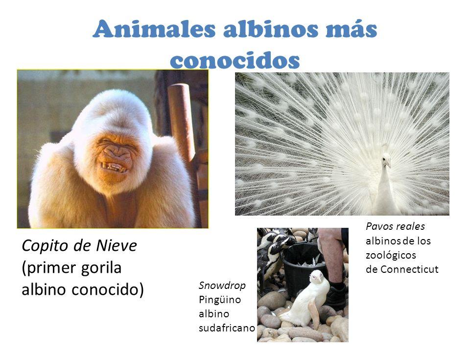 Animales albinos más conocidos