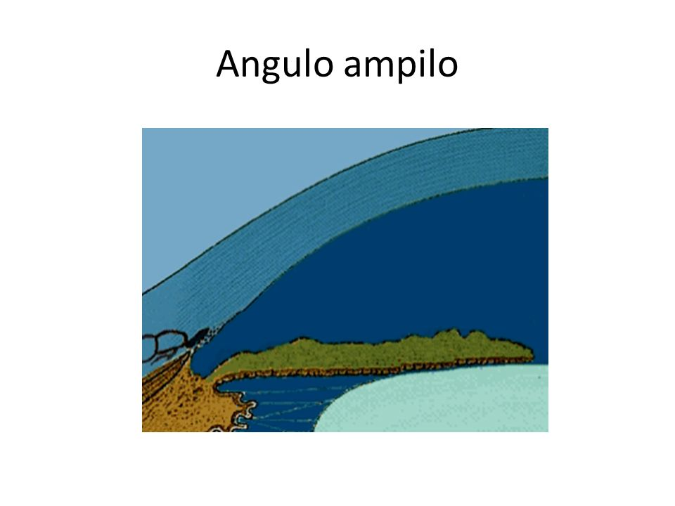 Angulo ampilo