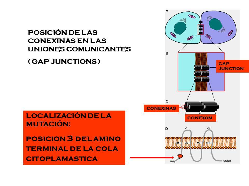 posicion 3 del amino terminal de la cola citoplamastica