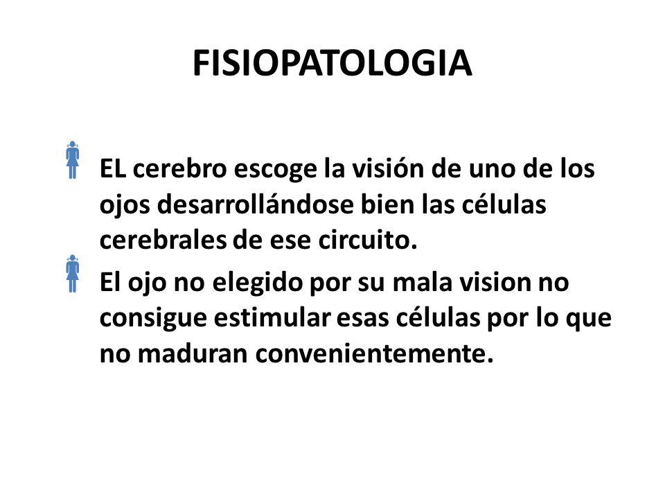 FISIOPATOLOGIA EL cerebro escoge la visión de uno de los ojos desarrollándose bien las células cerebrales de ese circuito.