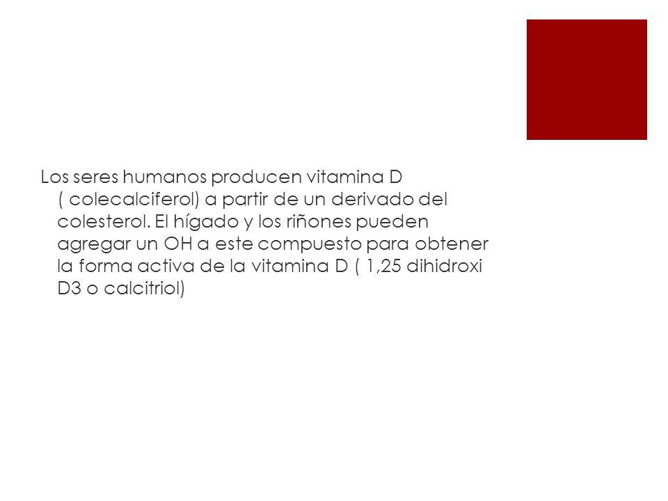Los seres humanos producen vitamina D ( colecalciferol) a partir de un derivado del colesterol.