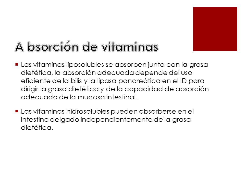 A bsorción de vitaminas