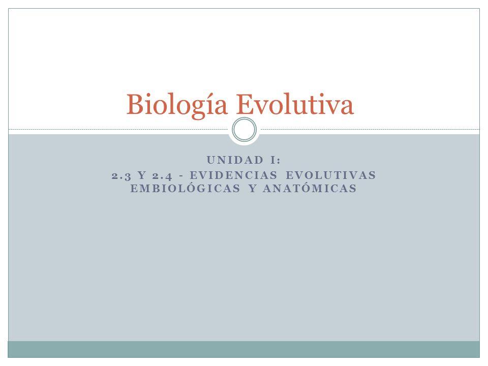 Unidad I: 2.3 y 2.4 - Evidencias evolutivas EMBIOLóGICAS y Anatómicas