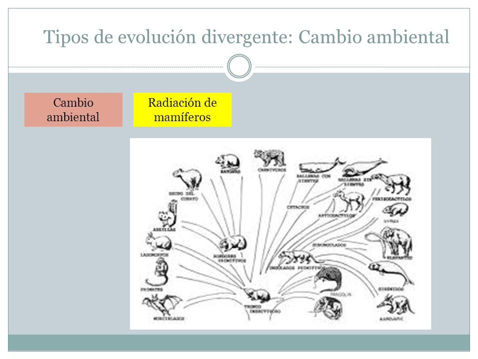 Tipos de evolución divergente: Cambio ambiental