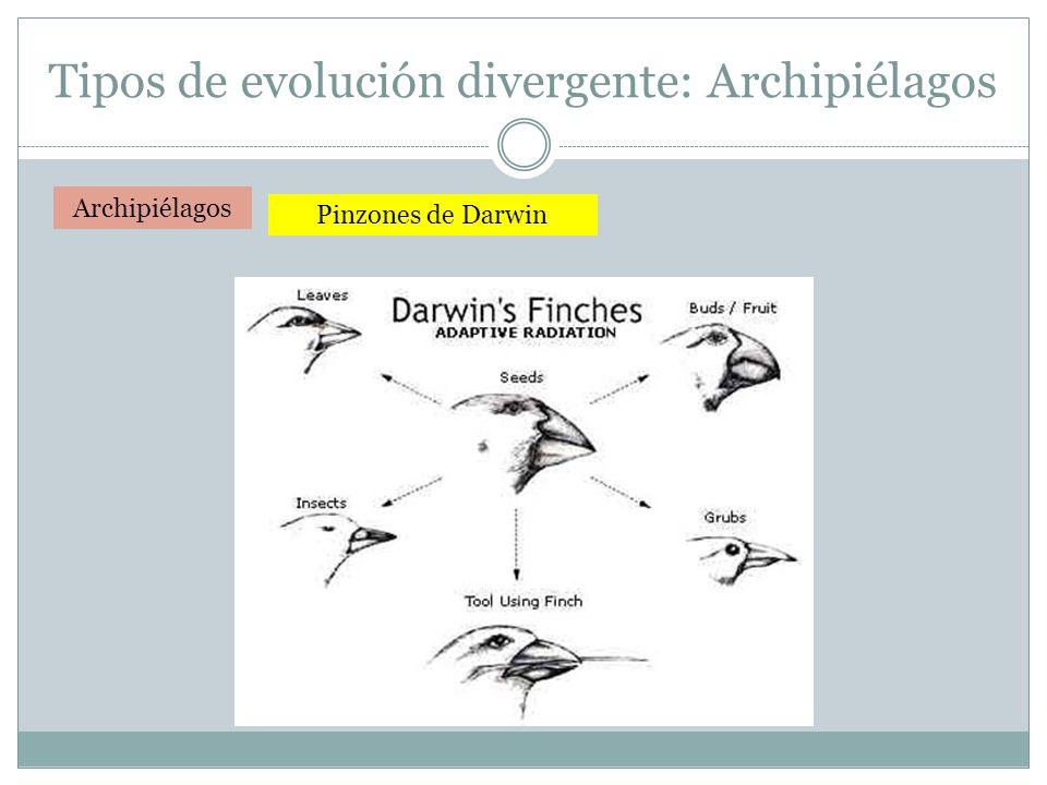 Tipos de evolución divergente: Archipiélagos
