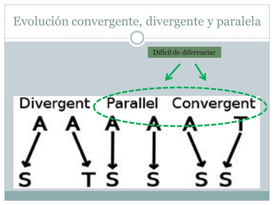 Evolución convergente, divergente y paralela