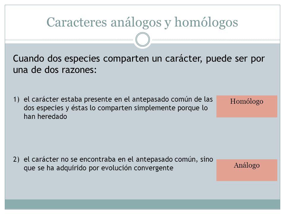 Caracteres análogos y homólogos